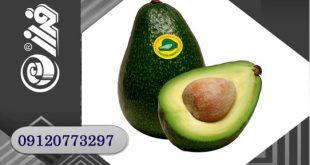 لیبل میوه صادراتی